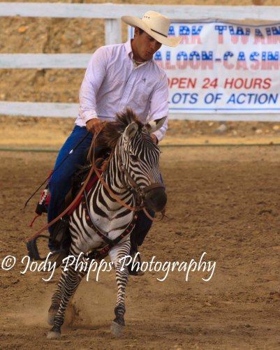 Zebra racing made its debut at the 2012 International Camera Races in Virgina City, Nevada.