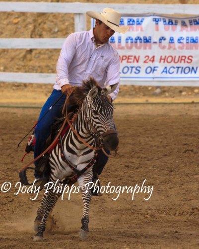 Zebra racing made its debut at the 2012 International Camera Races in Virgina City, Nevada.