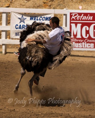 A unknown rider takes a literal spin on an ostrich during the 2012 International Camera Races in Virginia City, Nevada