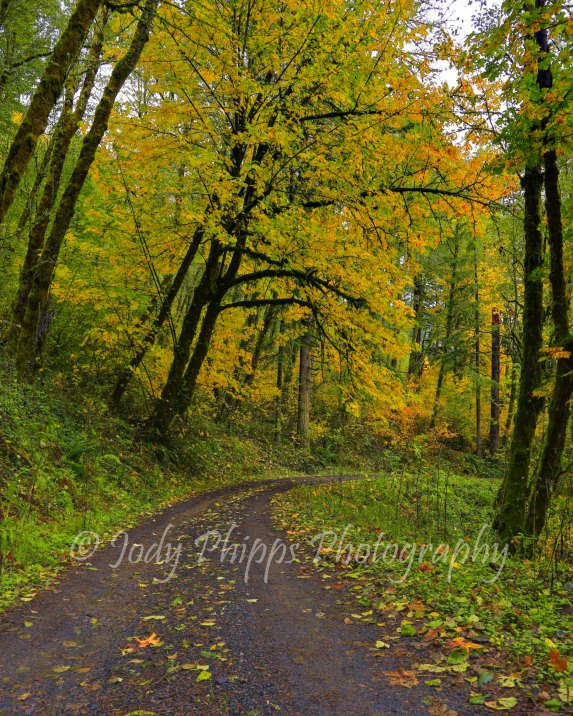 A one lane gravel road leading down to the Columbia River Gorge