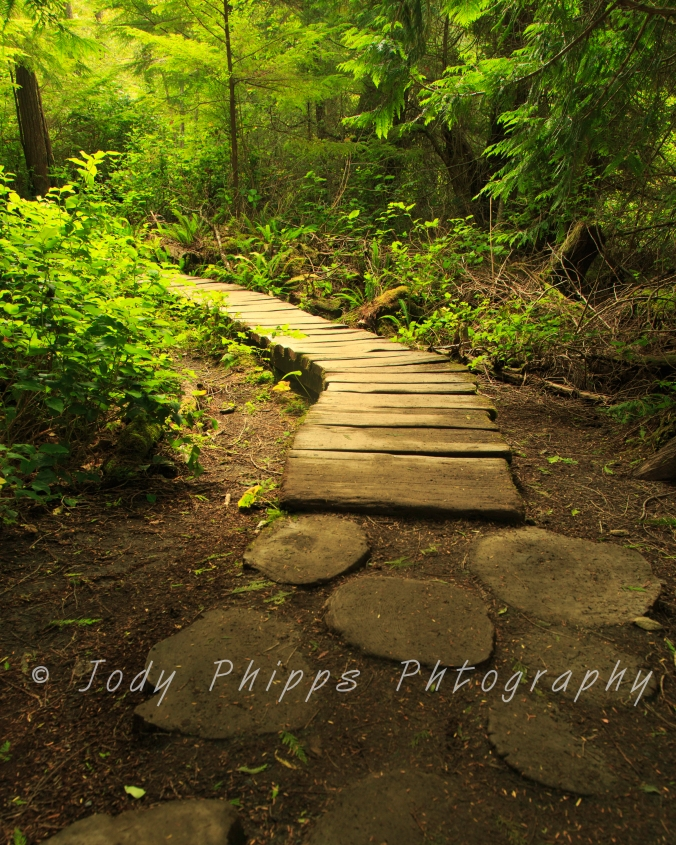 "Wooden ""stepping stones"" lead to a plank boardwalk on muddier sections of the trail to Cape Flattery."