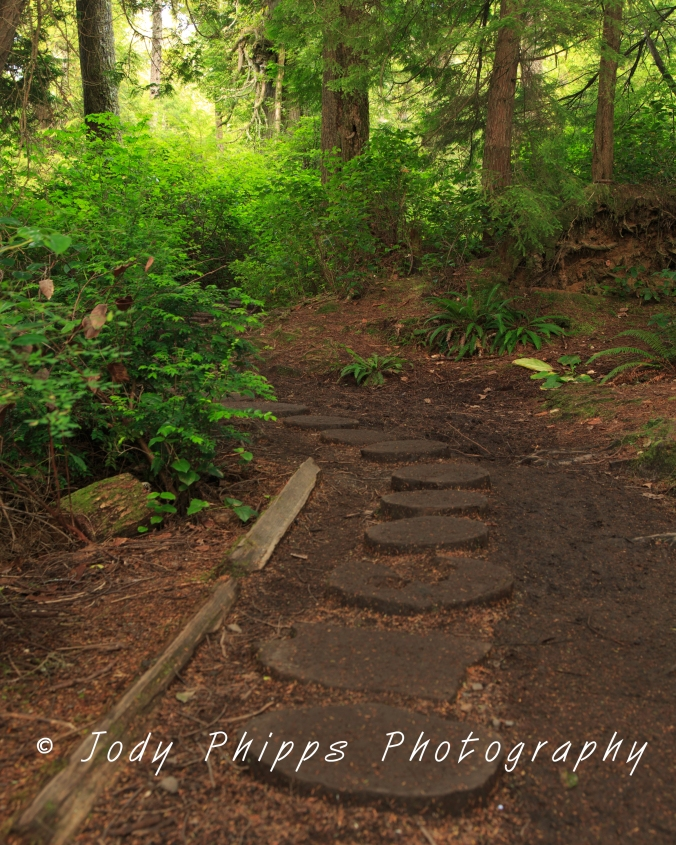 "Wooden ""stepping stones"" on the trail to Cape Flattery."