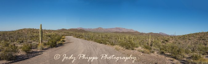 The Ajo Mountains lie in the distance along the Ajo Mountain Drive in Organ Pipe Cactus National Monument.