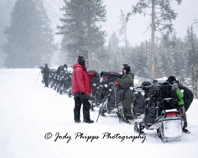 Photographers on snowmobiles line up along the banks of the Madison River to photograph elk and tundra swans.