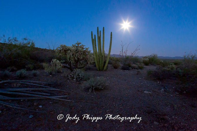 A full moon rises behind an Organ Pipe Cactus in Organ Pipe Cactus National Monument.