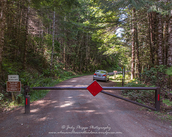 After securing the gate, it was time to continue down to the trail head for the hike into Tall Trees Grove