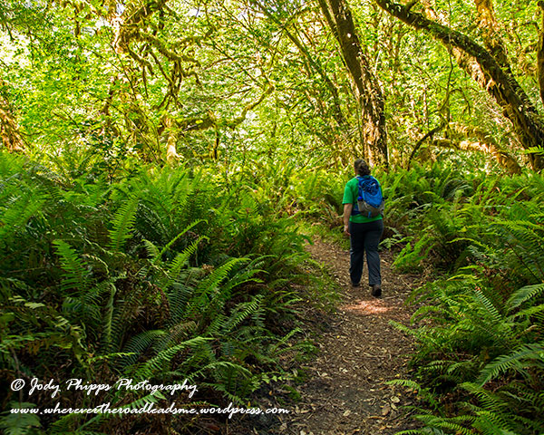 The trail wanders away from the Redwoods briefly immersing you in sword ferns and big leaf maples.