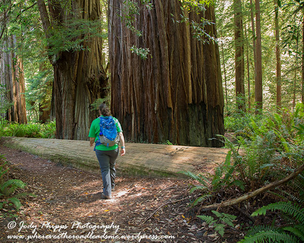 A walk through the giant Coastal Redwoods makes one feel mighty small.