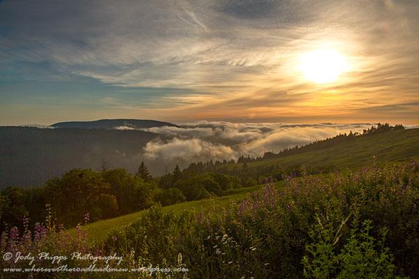 Evening fog rolls in along Redwood Creek in Redwood National & State Parks